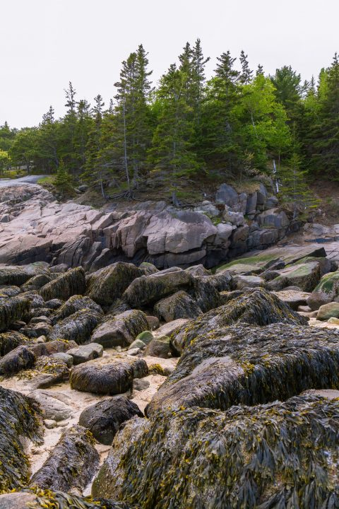 Otter Creek, Acadia National Park